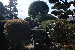 マルイケカフェ庭 (2)s